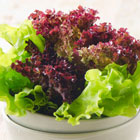 Cos Lettuce Salad